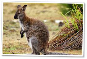 australie4